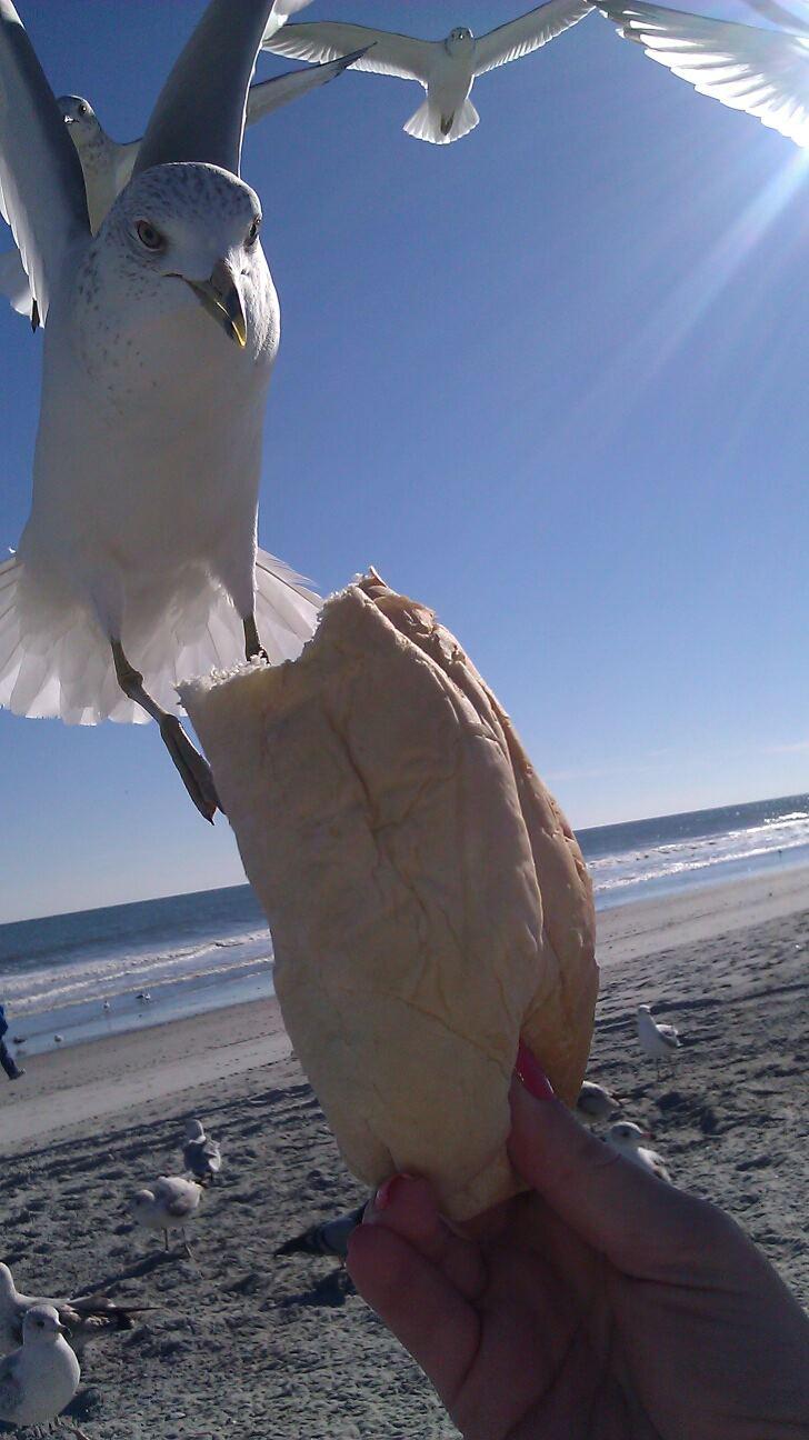 Seagulls In Myrtle Beach
