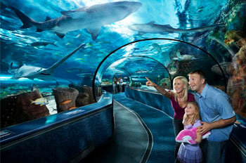 Kids Hands on Attraction - Ripleys Aquarium