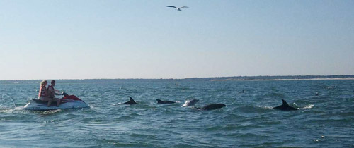 Check out Dolphins in Myrtle