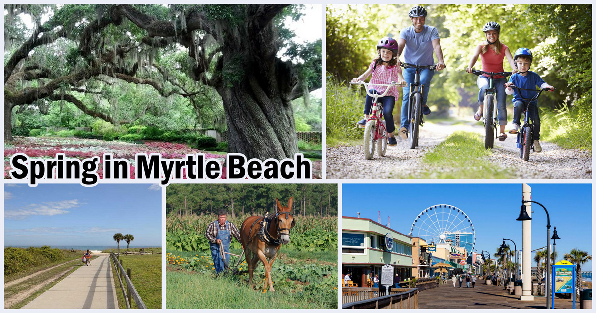 Best Things To Do In Myrtle Beach In April