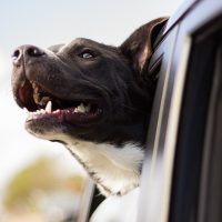 5 Reasons To Bring Your Dog On Your Next North Myrtle Beach Vacation