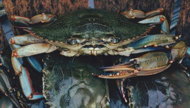Tips For Catching Crabs In North Myrtle Beach