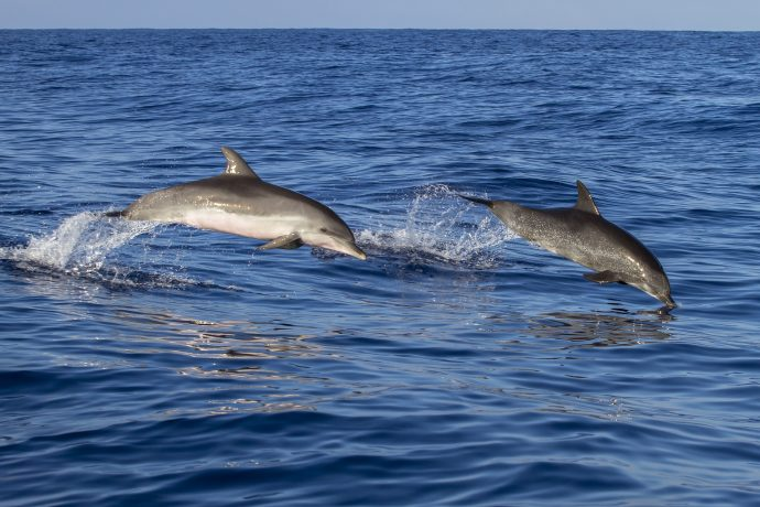 Top 5 Ways To See Dolphins In North Myrtle Beach